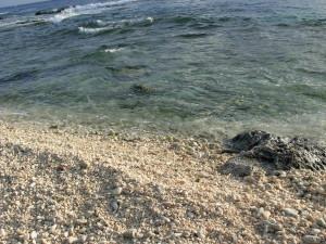 Wake shore