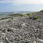 Peale north shore
