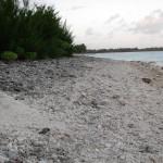 North beach Wake