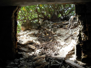 Rubble fill inside Japanese pillbox