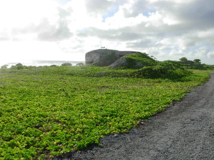 Pillbox and defensive works