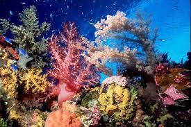 Reef coral Micronesia